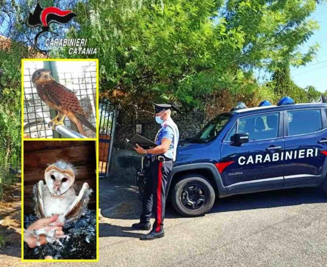 Catturava e deteneva uccelli di specie protetta e usufruiva di acqua e luce gratis